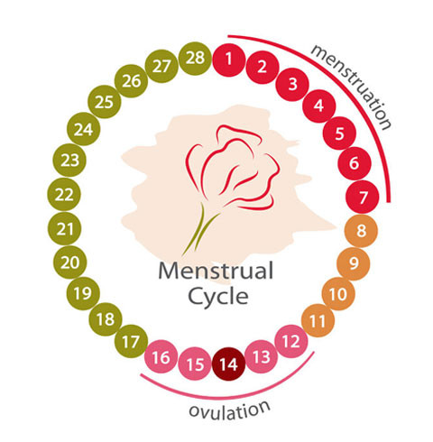 排卵障礙|中醫
