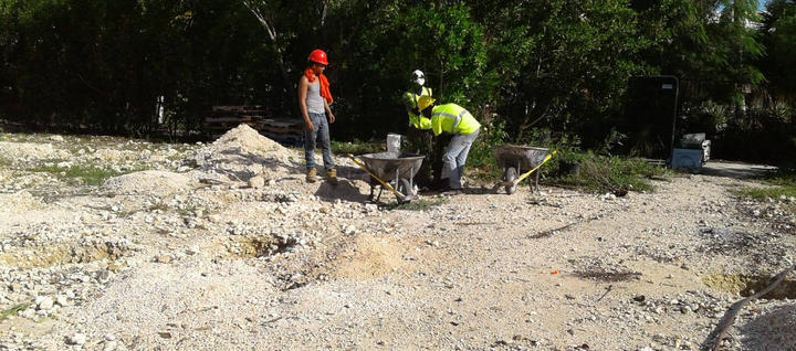 Replanting of trees to preserve and reuse them at Wellness Garden . . #Replanting #MovingLandscaping #WellnessGarden #SevenMileBeach #CaymanIslands #RobsonConstruction
