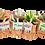 Thumbnail: עציצי סקולנט בסלסלת יוטה עם מסר