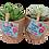 Thumbnail: סקולנטים בסלסלות יוטה - עציצים עם מסר