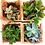 Thumbnail: עציצי סקולנטים עם מסרים