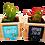 Thumbnail: עציצי סקולנטים עם מסרים של בית ומשפחה