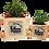 Thumbnail: עציצי סקולנטים עם מסרים ירוקים