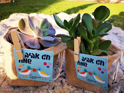 סקולנטים בסלסלות יוטה - עציצים עם מסר