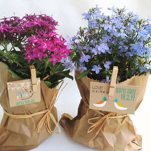 עציץ צמחי תבלין ופרחים לאירועים