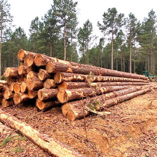 Sorting Poles and Piling