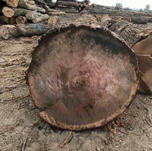 Veneer White Oak