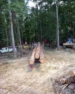Grade Pine Log