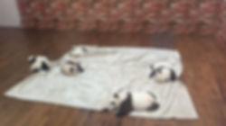 熊猫47.jpg