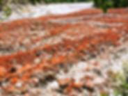 红石滩.jpg