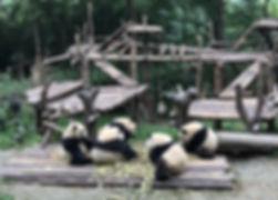熊猫155.jpg