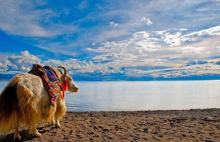 Namtso Lake, Holy Yak, SIC Tibet tours, Lhasa travel agency,Tibet travel agency, tailored Tibet tours,Tibet tour packages, Lhasa tour packages, Potala Palace
