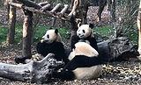 熊猫4826_edited.jpg