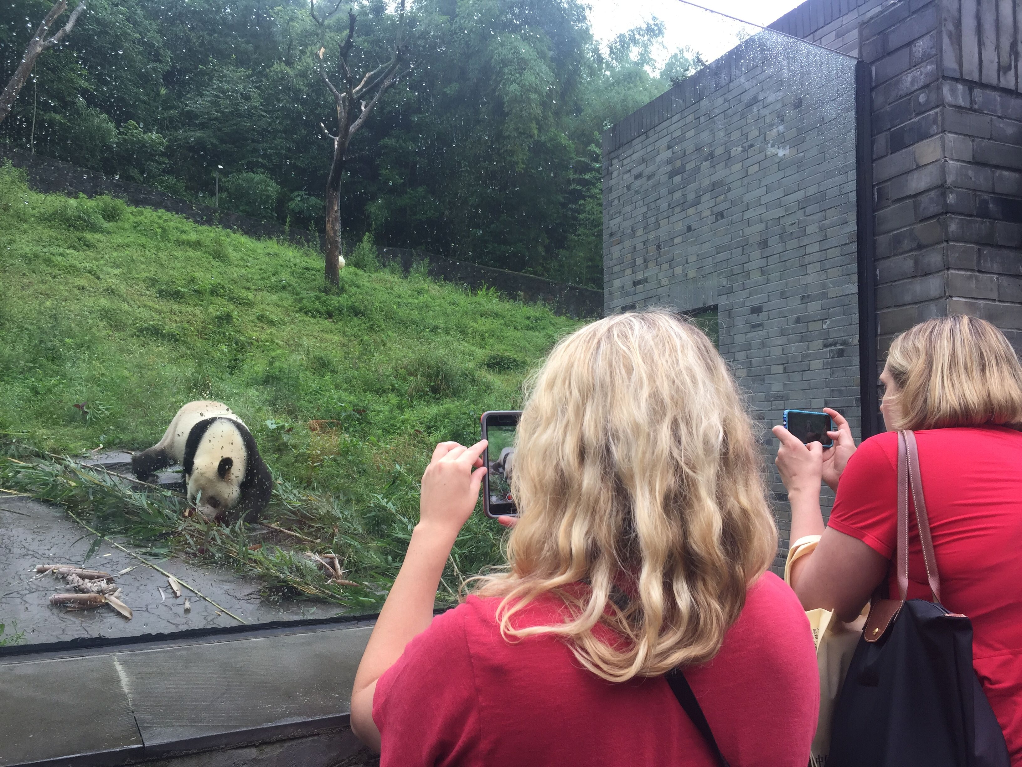 Take photos for the pandas