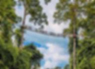 望天树.jpg