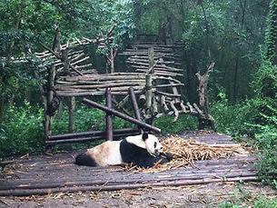 熊猫435.jpg
