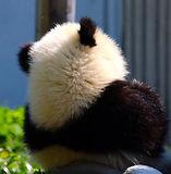 熊猫111 3.jpg