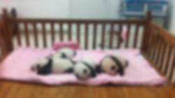 新生熊猫39.jpg