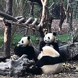 熊猫4826.jpg