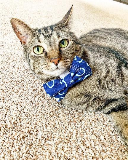 Oliver bow tie.jpg