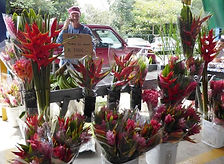 Your tropical flowers you buy at Theo