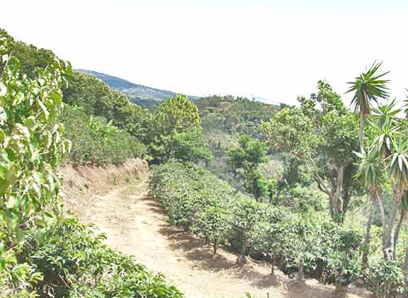 Costa Rica Lot 1 looking toward lot 2 Vi