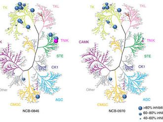 Wnt ингибитор, уничтожающий стволовые клетки колоректального рака.