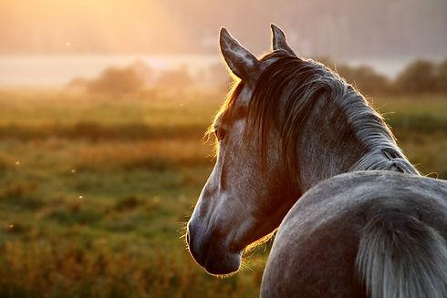 Horse on pasture at September evening ne