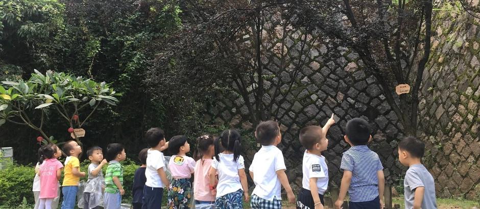 Kids Picking Plums