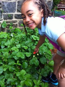 shobi berries