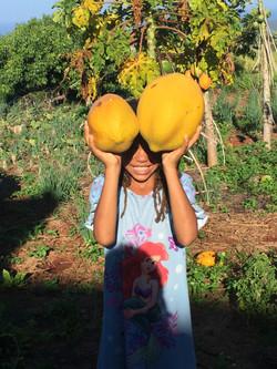 Sugar sweet Papaya