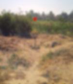 Oak Grove Disc Golf Course - Pasadena, C