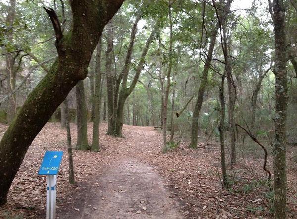 Blue Angel Park - Oaks DGC - !.jpg