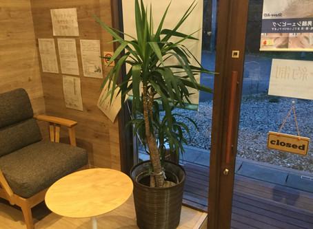 店内の植物