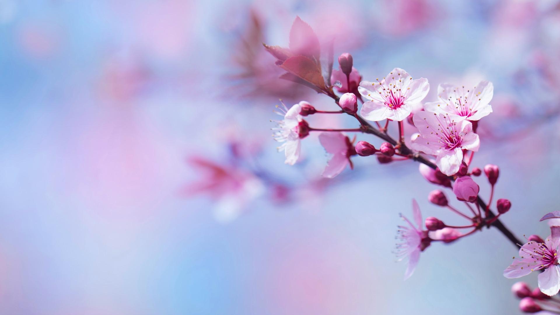 fleur de bach2