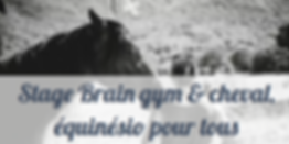 photo stage brain gym et cheval.PNG