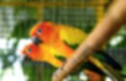 241113-1600x1030-sun-conure-pet-care.jpg