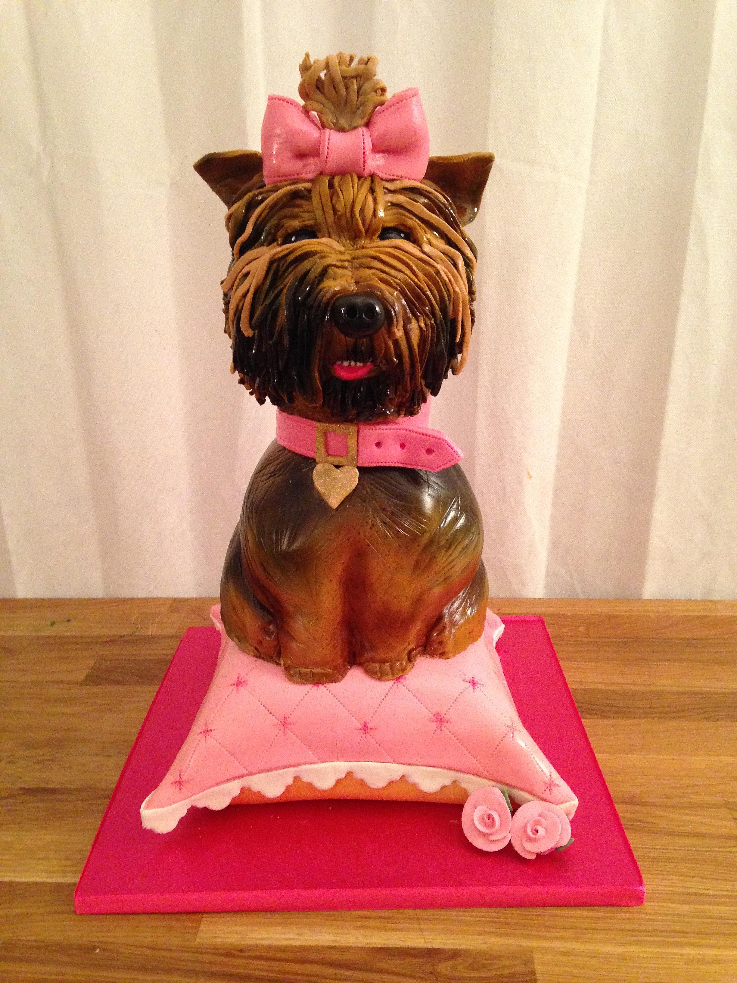 Birthday Cake Yorkie
