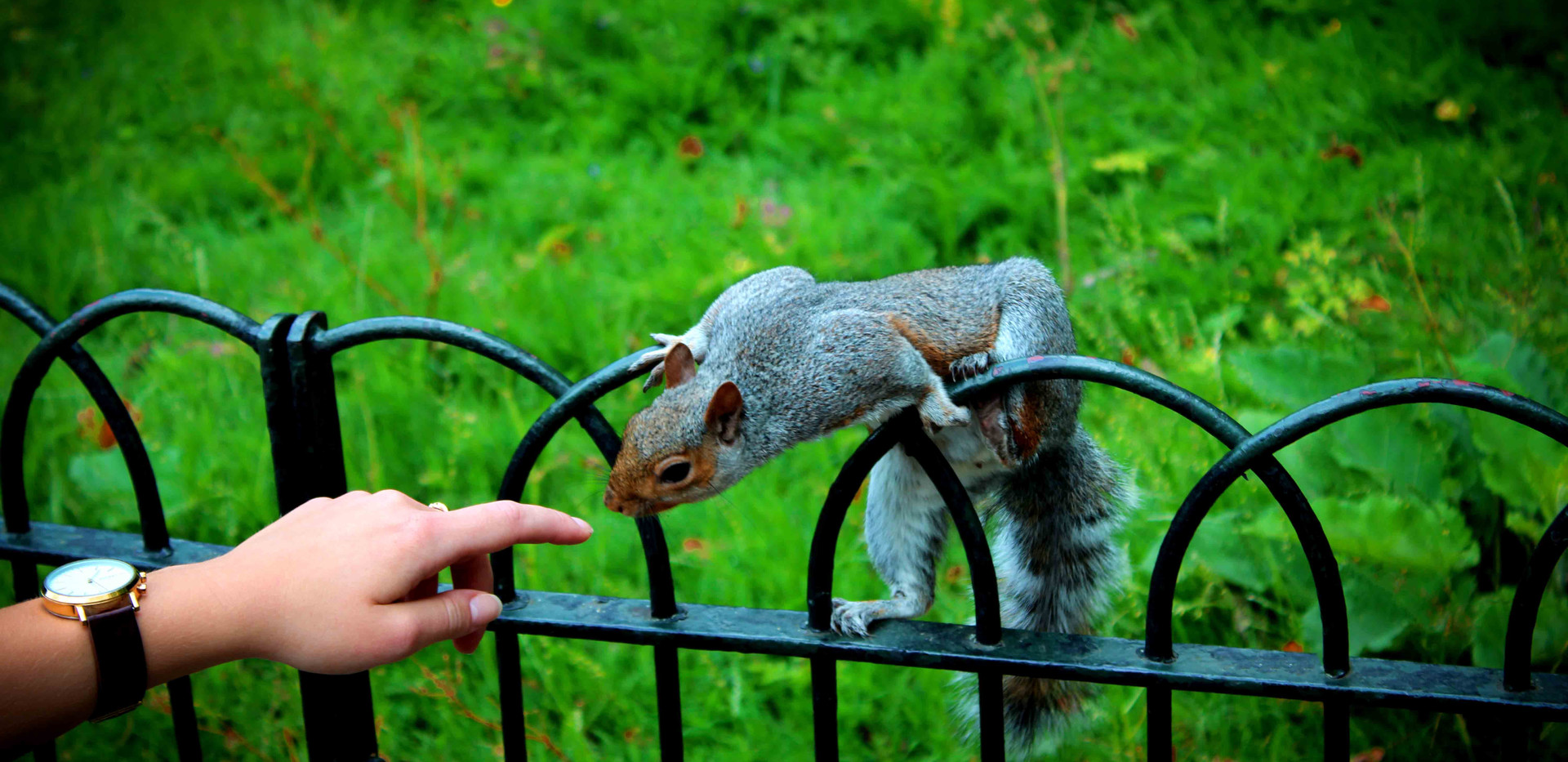 Squirrel in Green Park