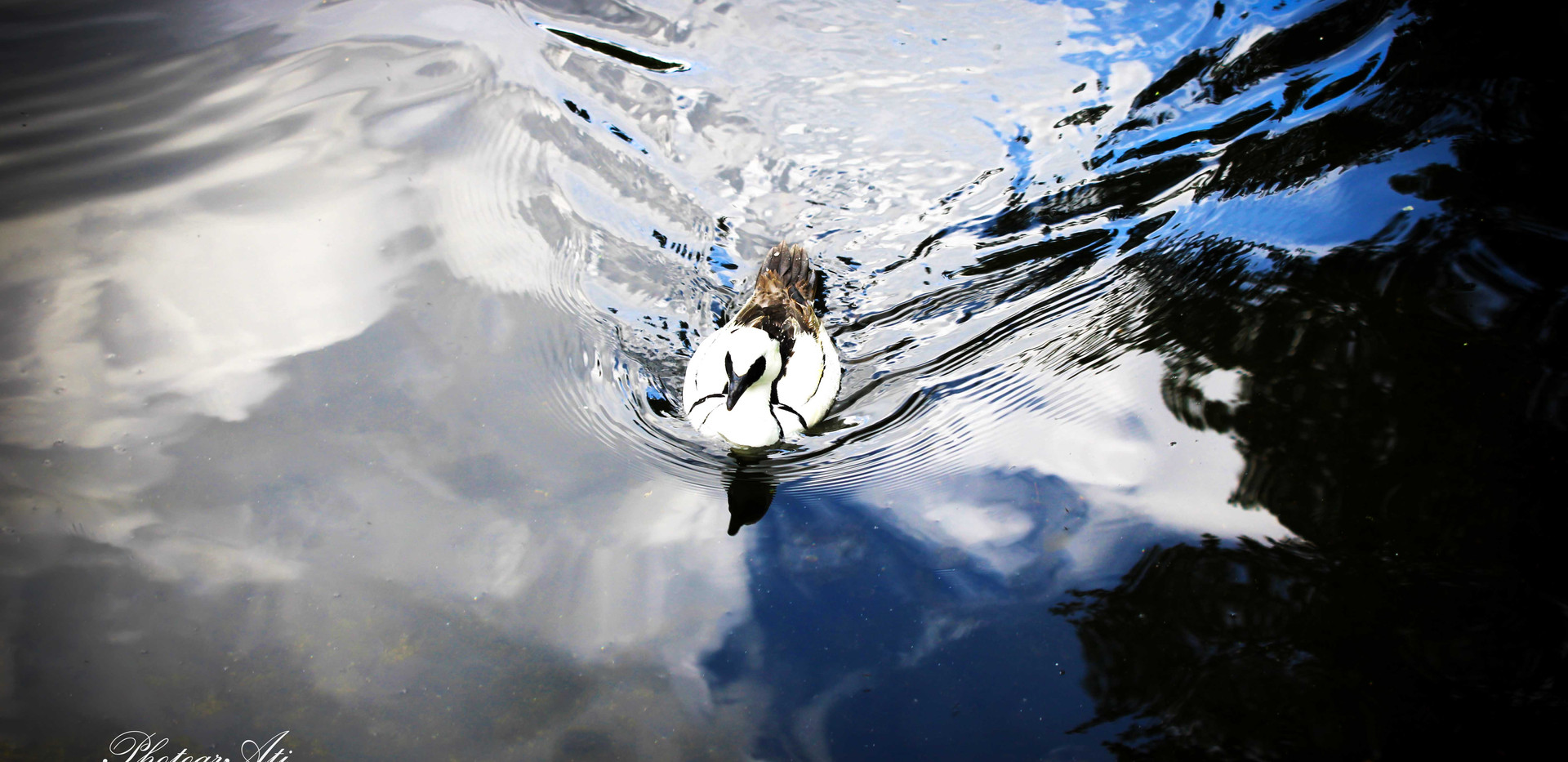 Smew in green Park
