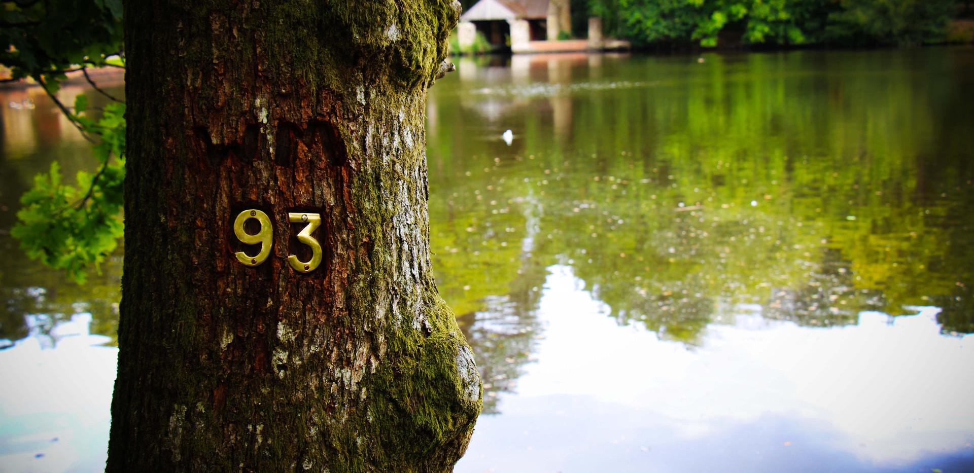 tree93