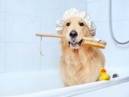 ¿El shampoo para perros  elimina los piojos?
