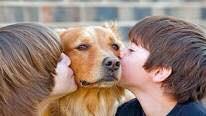 ¿Es posible el contagio de piojos entre humanos y mascotas?