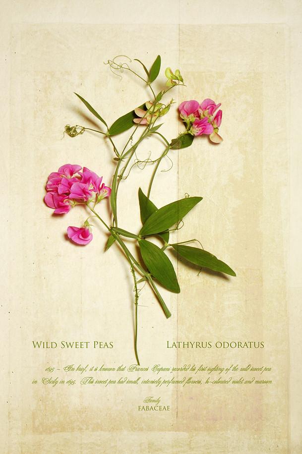 Botanical_01