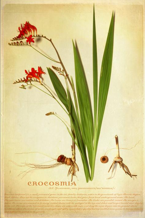 Botanical_03
