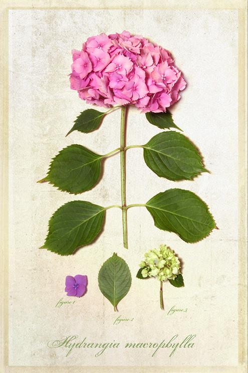 Botanical_04