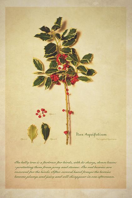 Botanical_05