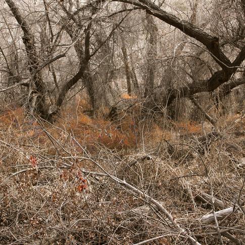 Morongo Canyon Preserve