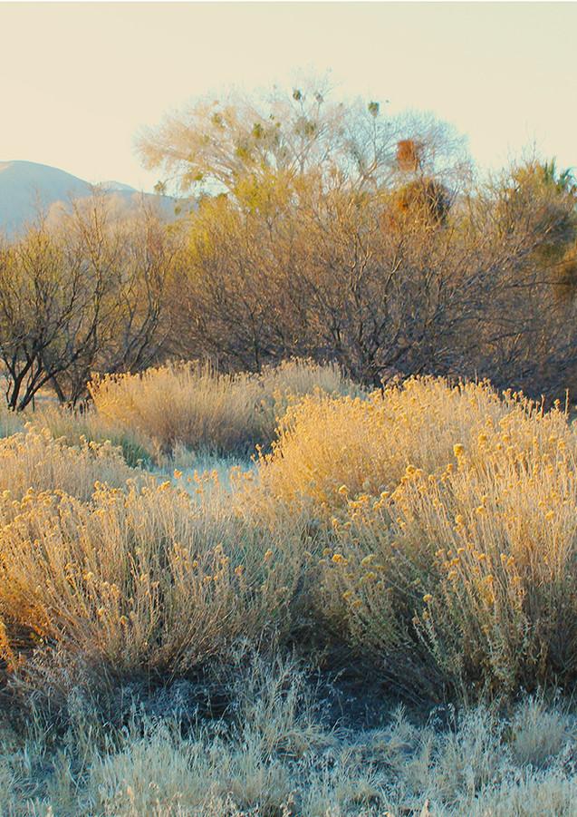 Morongo Canyon Dusk
