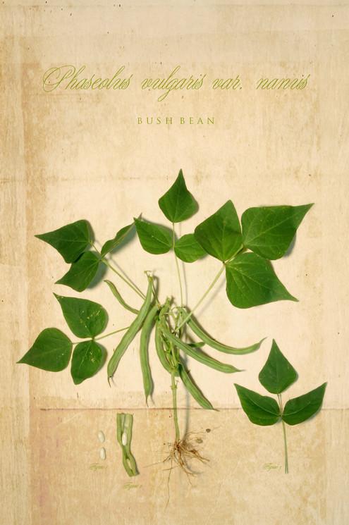 Botanical_06